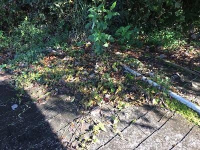 コケや草が生えたカラーベスト屋根