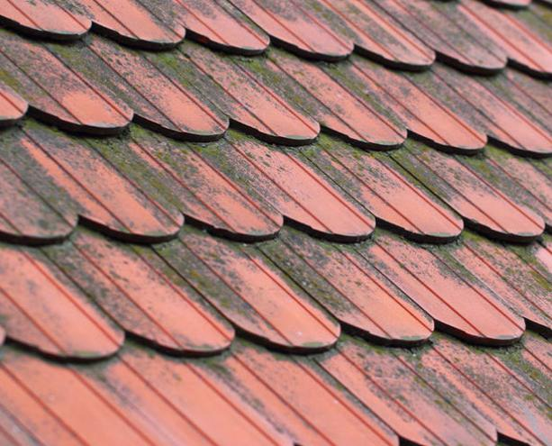 屋根 カビ